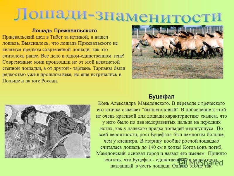 Лошадь Прежевальского Пржевальский шел в Тибет за истиной, а нашел лошадь. Выяснилось, что лошадь Пржевальского не является предком современной лошади, как это считалось ранее. Все дело в одном-единственном гене! Современные кони произошли не от этой