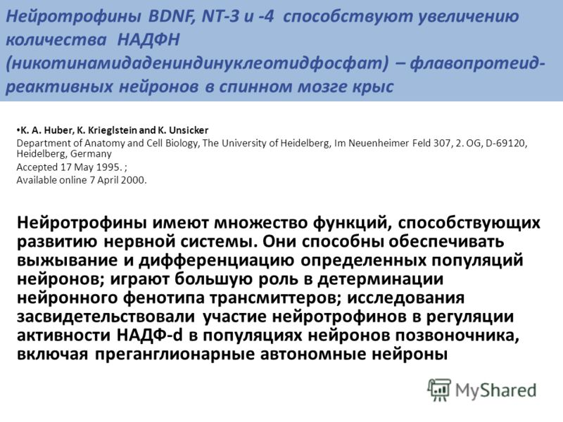 Нейротрофины BDNF, NT-3 и -4 способствуют увеличению количества НАДФН (никотинамидадениндинуклеотидфосфат) – флавопротеид- реактивных нейронов в спинном мозге крыс K. A. Huber, K. Krieglstein and K. Unsicker Department of Anatomy and Cell Biology, Th