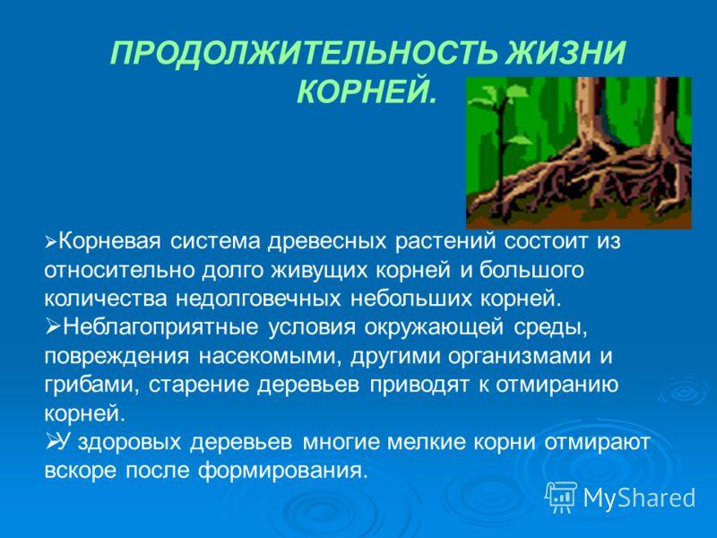 Корневая система древесных растений состоит из относительно долго живущих корней и большого количества недолговечных небольших корней. Неблагоприятные условия окружающей среды, повреждения насекомыми, другими организмами и грибами, старение деревьев