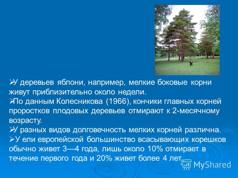 У деревьев яблони, например, мелкие боковые корни живут приблизительно около недели. По данным Колесникова (1966), кончики главных корней проростков плодовых деревьев отмирают к 2-месячному возрасту. У разных видов долговечность мелких корней различн