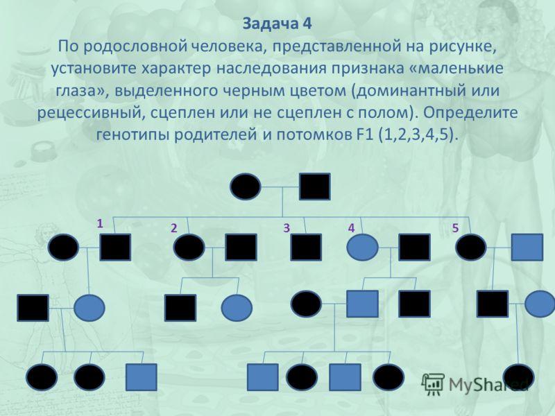Задача 4 По родословной человека, представленной на рисунке, установите характер наследования признака «маленькие глаза», выделенного черным цветом (доминантный или рецессивный, сцеплен или не сцеплен с полом). Определите генотипы родителей и потомко