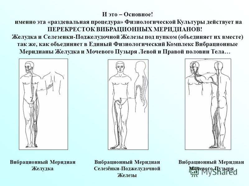 И это – Основное! именно эта «раздевальная процедура» Физиологической Культуры действует на ПЕРЕКРЕСТОК ВИБРАЦИОННЫХ МЕРИДИАНОВ! Желудка и Селезенки-Поджелудочной Железы под пупком (объединяет их вместе) так же, как объединяет в Единый Физиологически