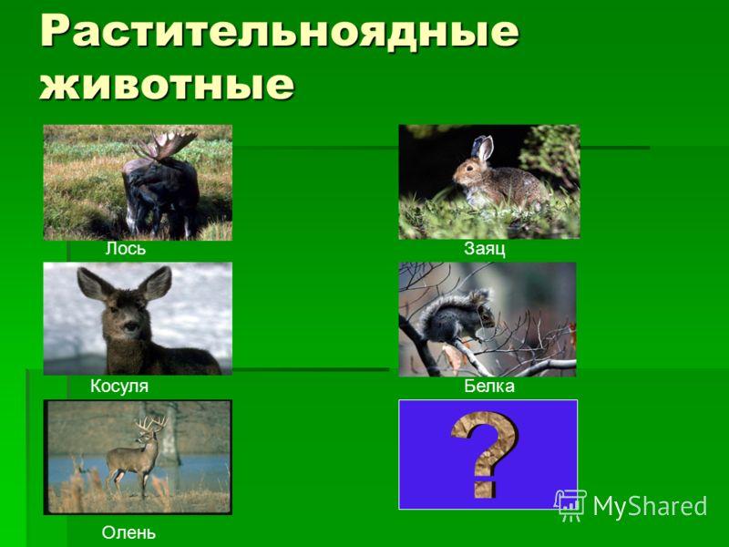 Растительноядные животные Лось Косуля Олень Заяц Белка