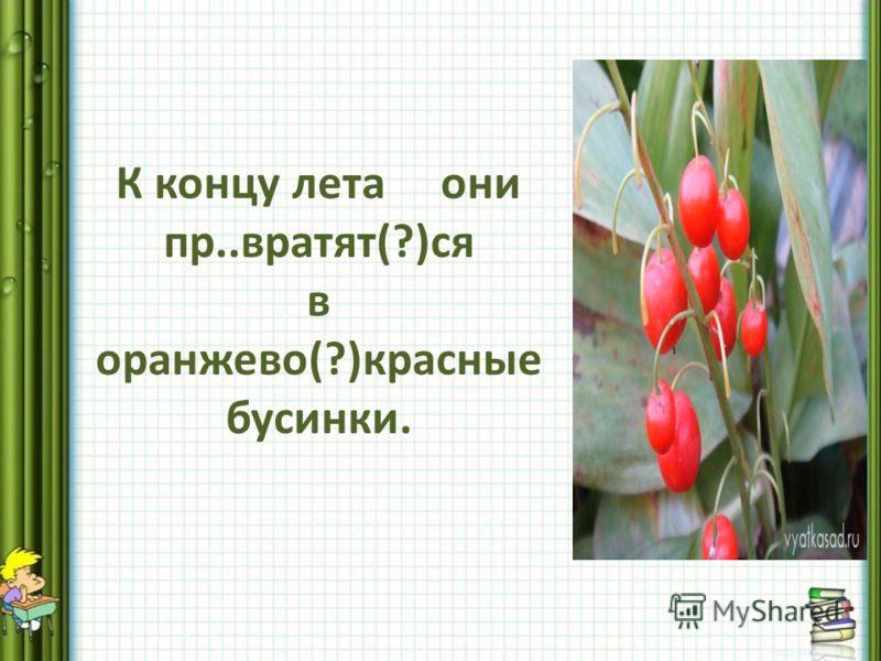 К концу лета они пр..вратят(?)ся в оранжево(?)красные бусинки.