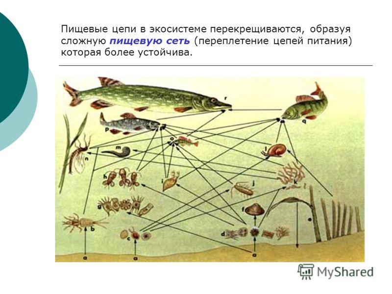 Пищевая цепь / цепь питания - передача энергии солнца, заключенной в пище, между организмами. Рис. Пищевая пирамида моря Функциональная единица биогеоценоза - пищевая цепь. Правило десяти процентов - переход с одного трофического уровня на другой 10%