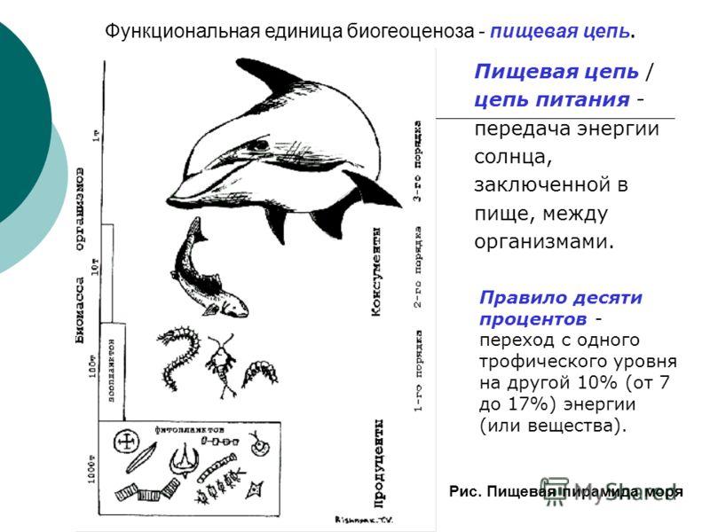 Правило пищевой пирамиды находит отражение в соотношении на планете биомасс растительного и животного происхождения: 99% - растения 1% - животные 0,0002% - люди