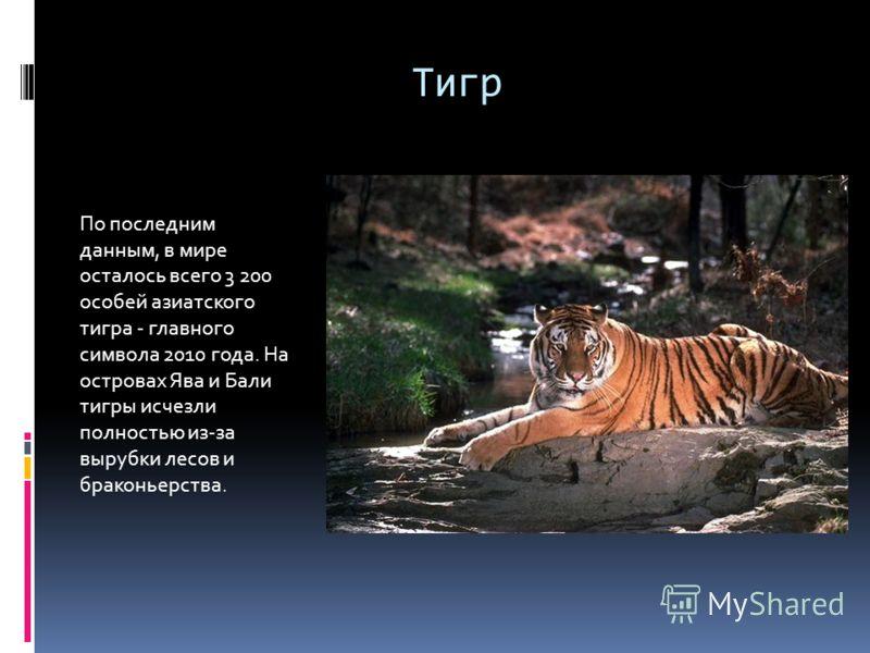 Тигр По последним данным, в мире осталось всего 3 200 особей азиатского тигра - главного символа 2010 года. На островах Ява и Бали тигры исчезли полностью из-за вырубки лесов и браконьерства.