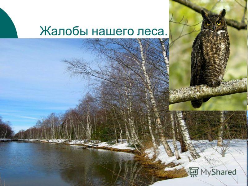 Жалобы нашего леса.