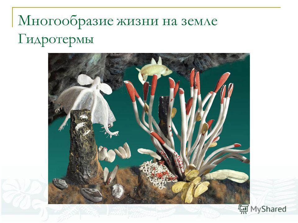 Многообразие жизни на земле Гидротермы