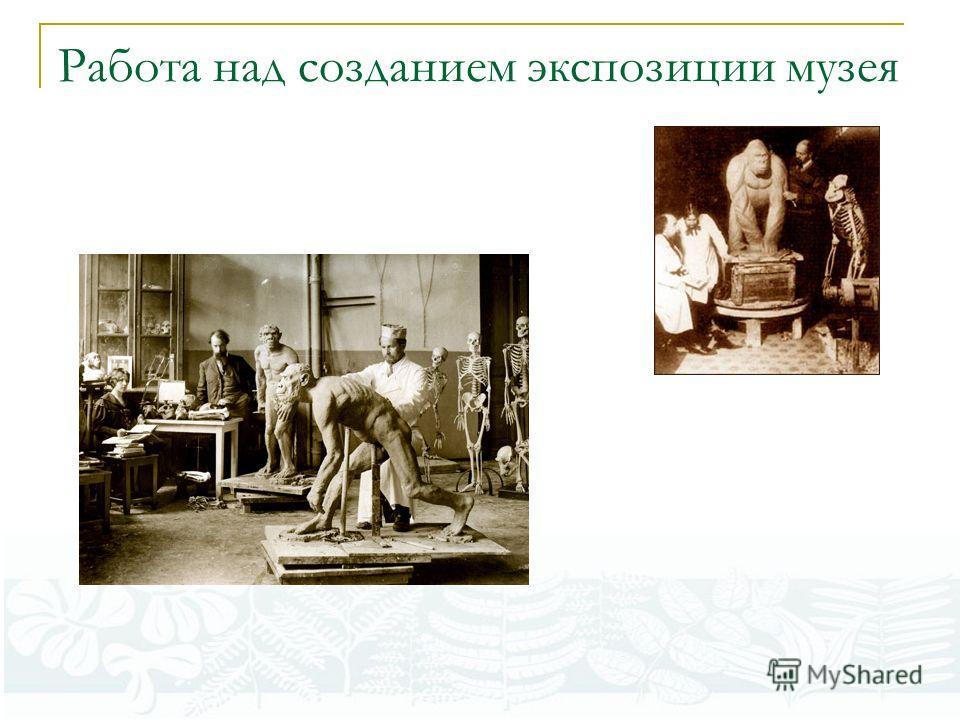 Работа над созданием экспозиции музея