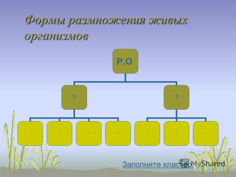 Формы размножения живых организмов Р.О. ? ???? ? ??? Заполните кластер.