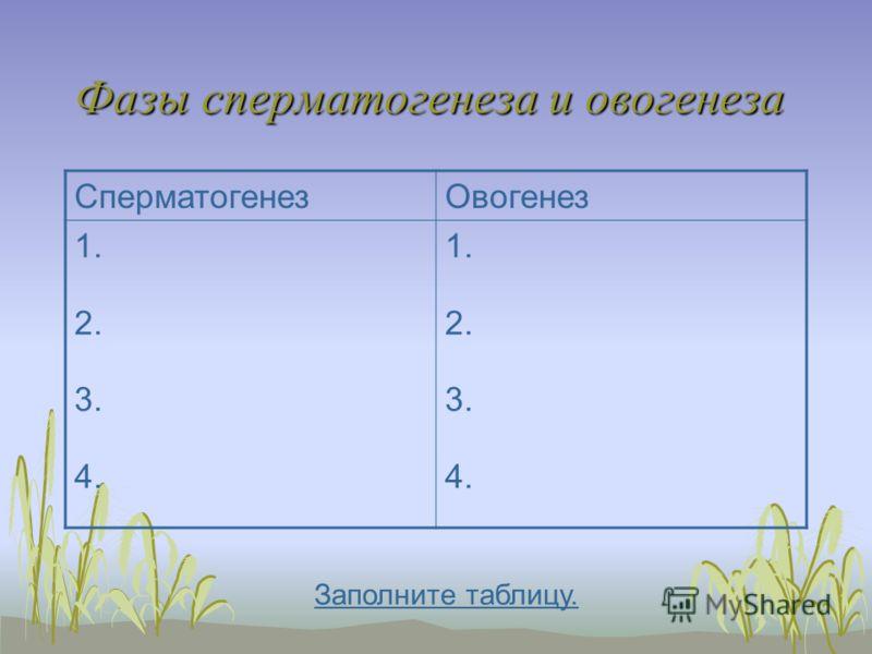 Фазы сперматогенеза и овогенеза СперматогенезОвогенез 1. 2. 3. 4. 1. 2. 3. 4. Заполните таблицу.