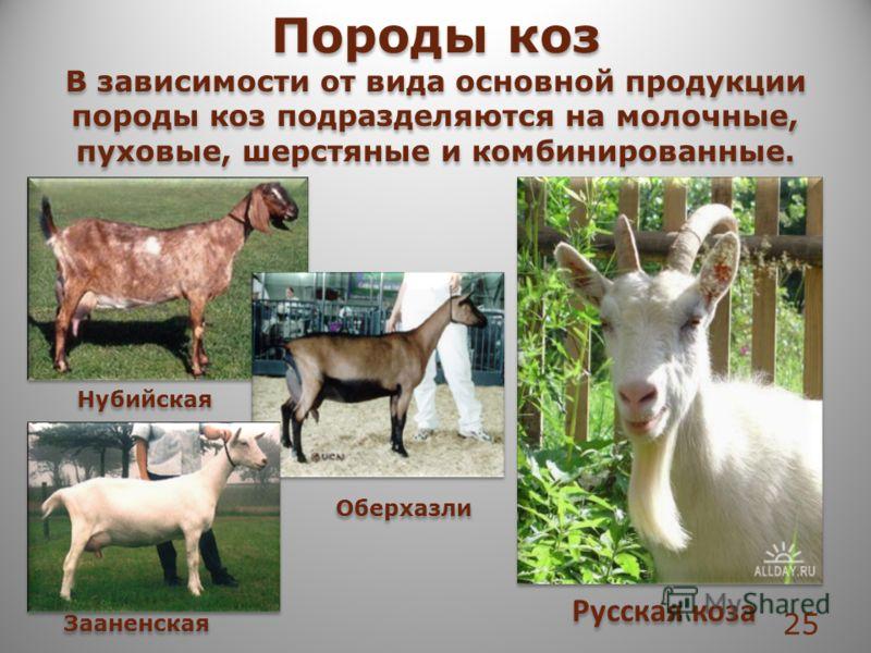 Породы коз В зависимости от вида основной продукции породы коз подразделяются на молочные, пуховые, шерстяные и комбинированные. Породы коз В зависимости от вида основной продукции породы коз подразделяются на молочные, пуховые, шерстяные и комбиниро
