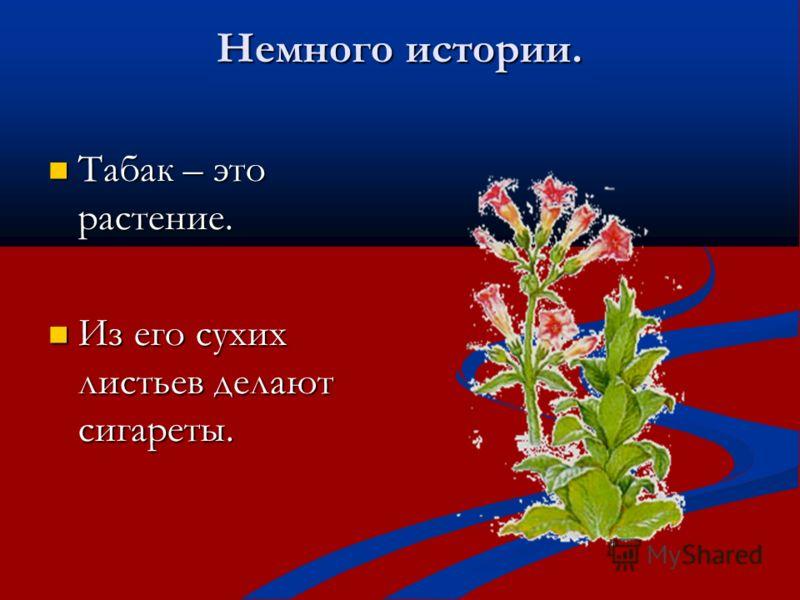 Немного истории. Табак – это растение. Табак – это растение. Из его сухих листьев делают сигареты. Из его сухих листьев делают сигареты.