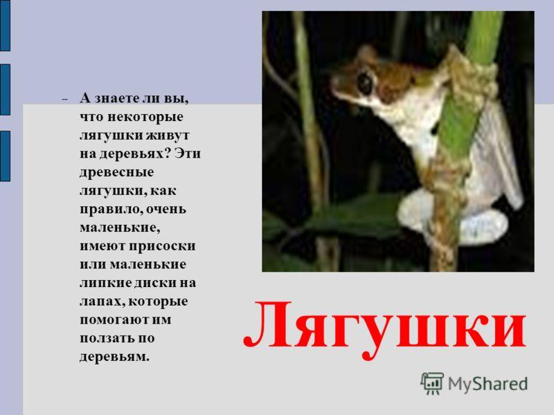А знаете ли вы, что некоторые лягушки живут на деревьях? Эти древесные лягушки, как правило, очень маленькие, имеют присоски или маленькие липкие диски на лапах, которые помогают им ползать по деревьям. Лягушки