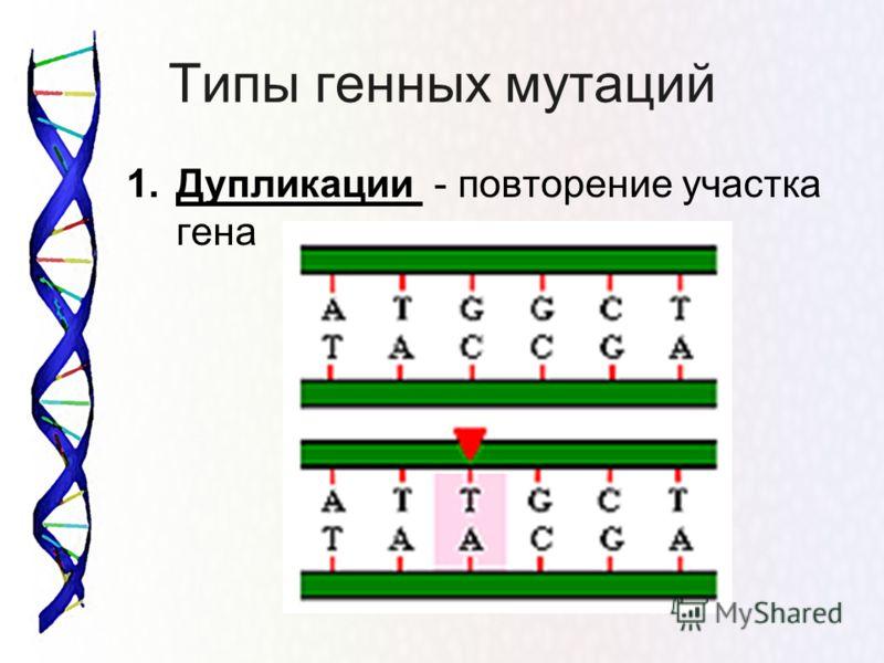 Типы генных мутаций 1.Дупликации - повторение участка гена
