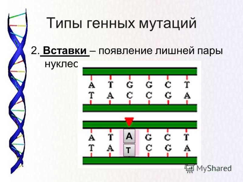 Типы генных мутаций 2. Вставки – появление лишней пары нуклеотидов А А Т Т