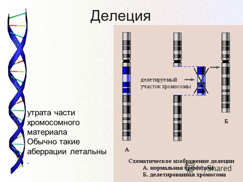 Делеция утрата части хромосомного материала Обычно такие аберрации летальны.