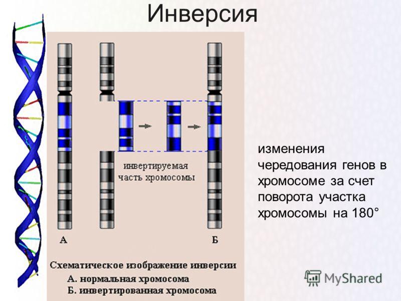 Инверсия изменения чередования генов в хромосоме за счет поворота участка хромосомы на 180°