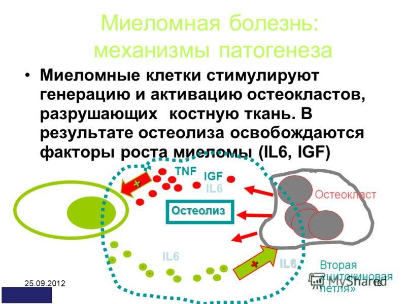 25.09.201216 Миеломная болезнь: механизмы патогенеза Миеломные клетки стимулируют генерацию и активацию остеокластов, разрушающих костную ткань. В результате остеолиза освобождаются факторы роста миеломы (IL6, IGF) IL6 TNF IGF IL6 Остеолиз IL6 + Втор