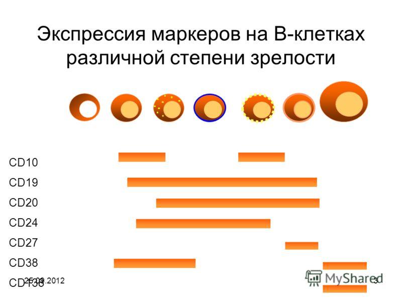 25.09.20123 Экспрессия маркеров на В-клетках различной степени зрелости Stem Pro B Pre B Immature Activated Memory Plasma Cell surface antigens CD10 CD19 CD20 CD24 CD27 CD38 CD138