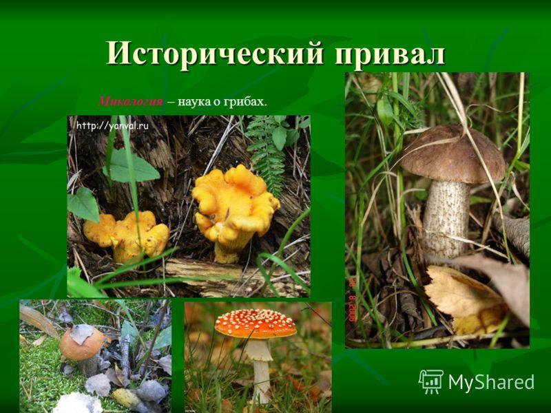 Исторический привал Микология – наука о грибах.