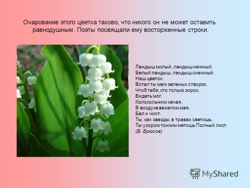 Очарование этого цветка таково, что никого он не может оставить равнодушным. Поэты посвящали ему восторженные строки. Ландыш милый, ландыш нежный, Белый ландыш, ландыш снежный, Наш цветок. Встал ты меж зеленых створок, Чтоб тебя, кто только зорок, Ви