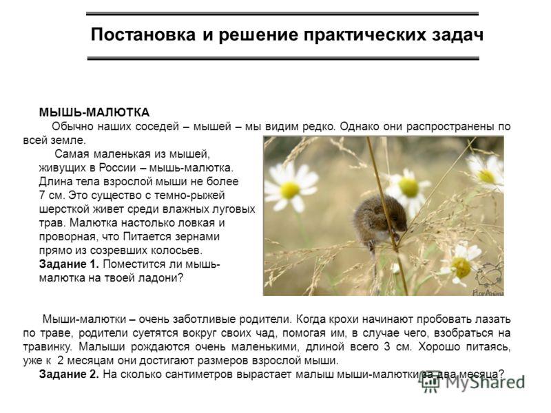 Постановка и решение практических задач МЫШЬ-МАЛЮТКА Обычно наших соседей – мышей – мы видим редко. Однако они распространены по всей земле. Самая маленькая из мышей, живущих в России – мышь-малютка. Длина тела взрослой мыши не более 7 см. Это сущест