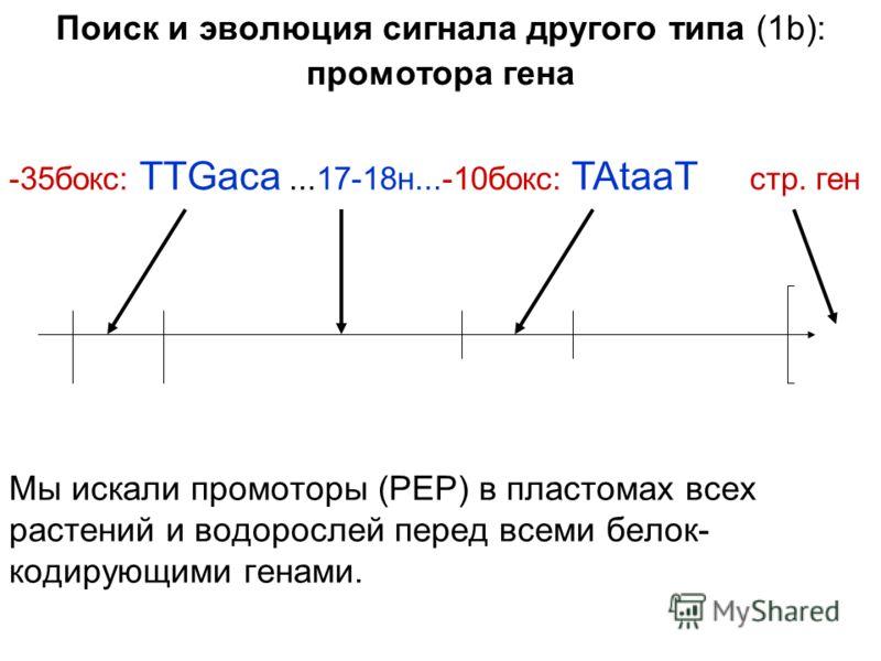 Поиск и эволюция сигнала другого типа (1b): промотора гена Мы искали промоторы (РЕР) в пластомах всех растений и водорослей перед всеми белок- кодирующими генами. -35бокс: TTGaca...17-18н...-10бокс: TAtaaT стр. ген
