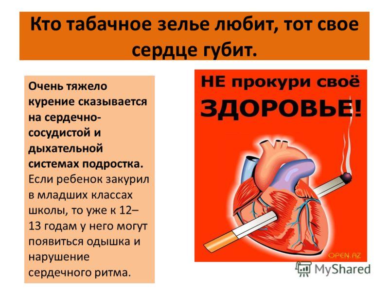 Кто табачное зелье любит, тот свое сердце губит. Очень тяжело курение сказывается на сердечно- сосудистой и дыхательной системах подростка. Если ребенок закурил в младших классах школы, то уже к 12– 13 годам у него могут появиться одышка и нарушение