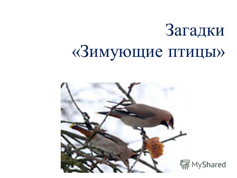 Загадки «Зимующие птицы»