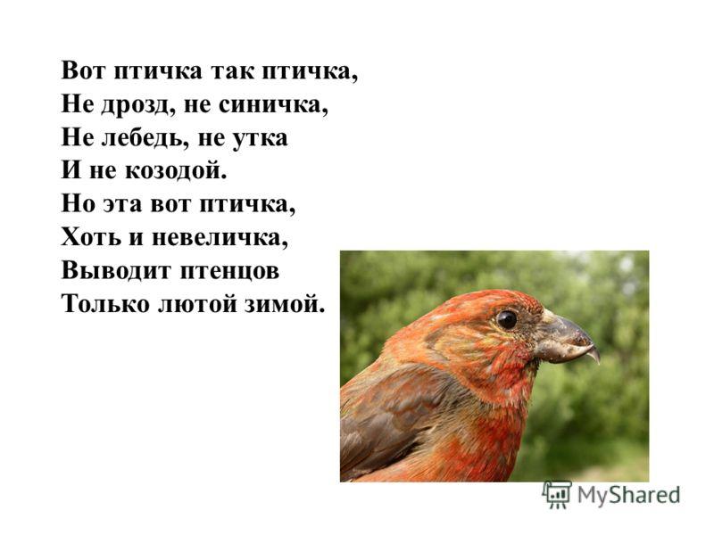 Вот птичка так птичка, Не дрозд, не синичка, Не лебедь, не утка И не козодой. Но эта вот птичка, Хоть и невеличка, Выводит птенцов Только лютой зимой.
