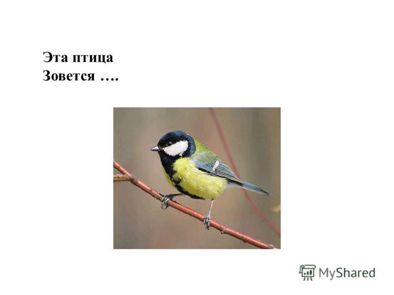 Эта птица Зовется ….