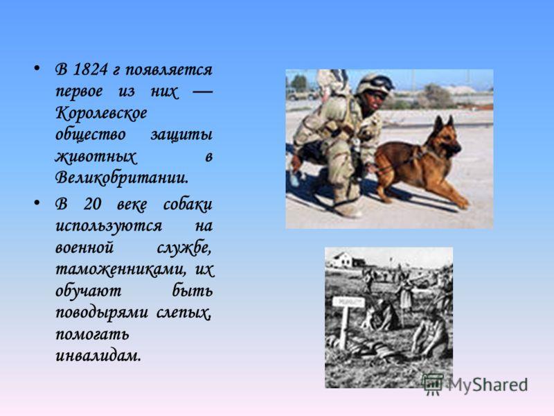 В 1824 г появляется первое из них Королевское общество защиты животных в Великобритании. В 20 веке собаки используются на военной службе, таможенниками, их обучают быть поводырями слепых, помогать инвалидам.