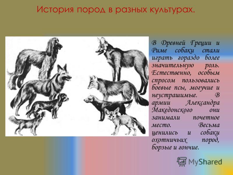 В Древней Греции и Риме собаки стали играть гораздо более значительную роль. Естественно, особым спросом пользовались боевые псы, могучие и неустрашимые. В армии Александра Македонского они занимали почетное место. Весьма ценились и собаки охотничьих