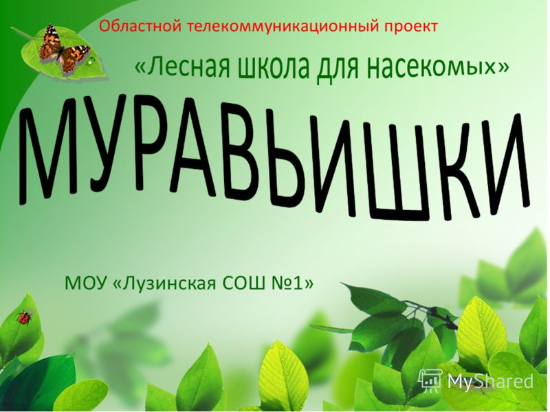 Областной телекоммуникационный проект МОУ «Лузинская СОШ 1»