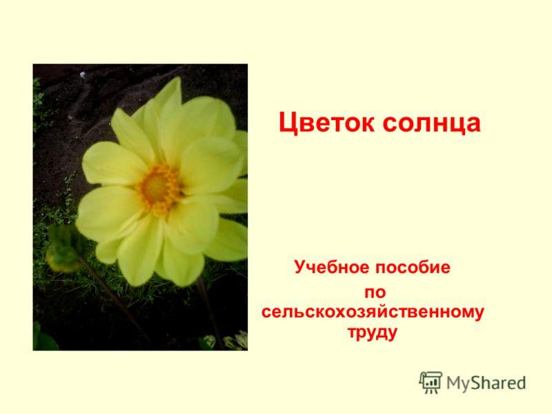 Цветок солнца Учебное пособие по сельскохозяйственному труду
