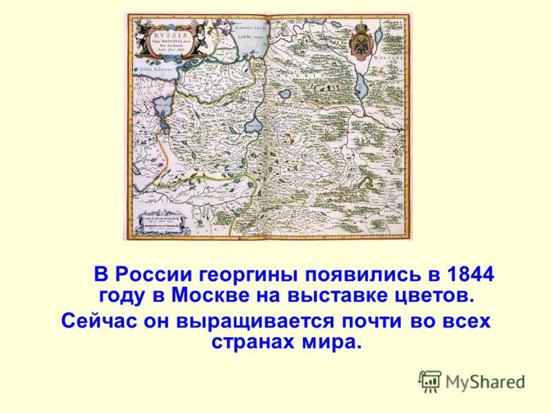 В России георгины появились в 1844 году в Москве на выставке цветов. Сейчас он выращивается почти во всех странах мира.