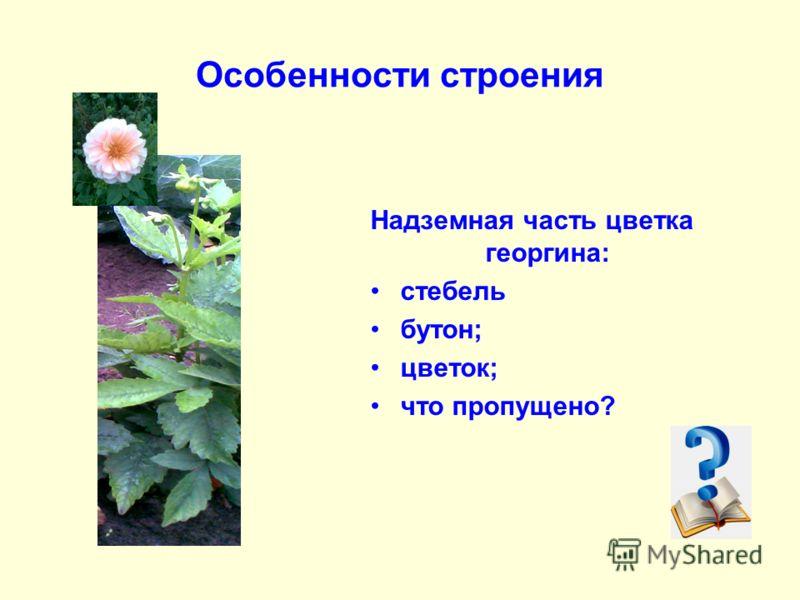 Особенности строения Надземная часть цветка георгина: стебель бутон; цветок; что пропущено?