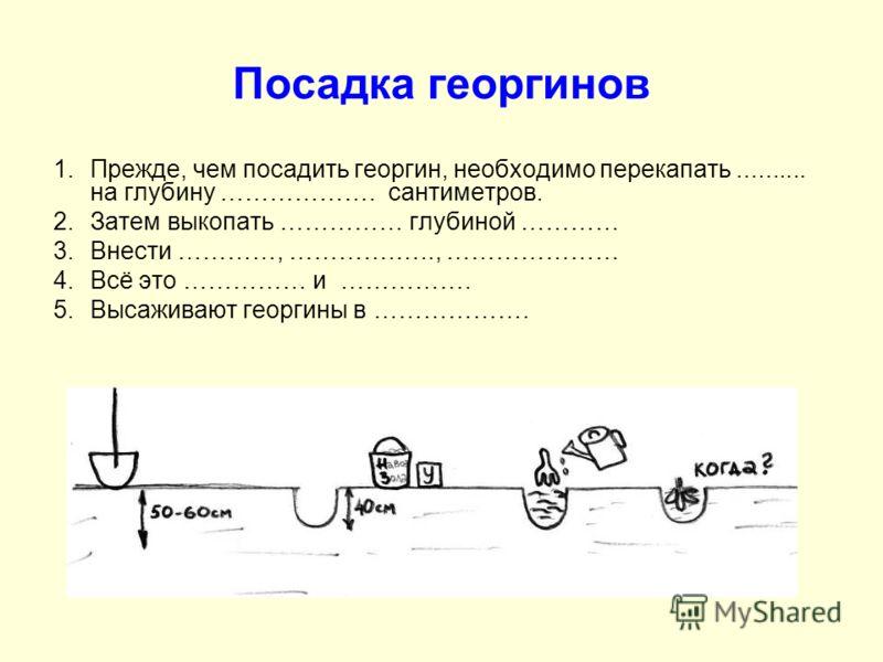 Посадка георгинов 1.Прежде, чем посадить георгин, необходимо перекапать.......... на глубину ………………. сантиметров. 2.Затем выкопать …………… глубиной ………… 3.Внести …………, ………….….., ………………… 4.Всё это …………… и ……………. 5.Высаживают георгины в ……………….