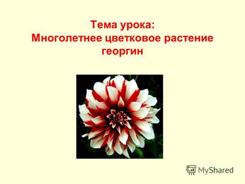 Тема урока: Многолетнее цветковое растение георгин