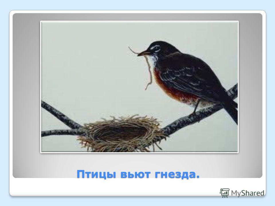 Птицы вьют гнезда.
