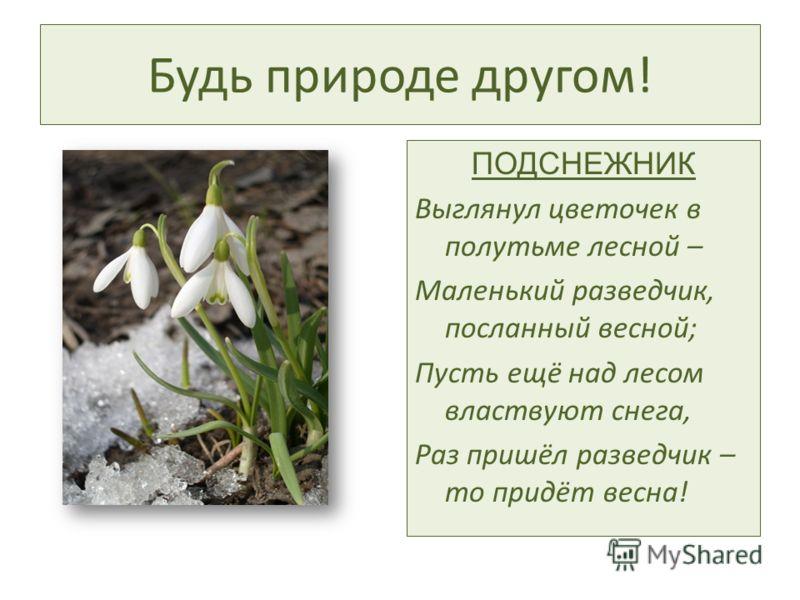 Будь природе другом! ПОДСНЕЖНИК Выглянул цветочек в полутьме лесной – Маленький разведчик, посланный весной; Пусть ещё над лесом властвуют снега, Раз пришёл разведчик – то придёт весна!