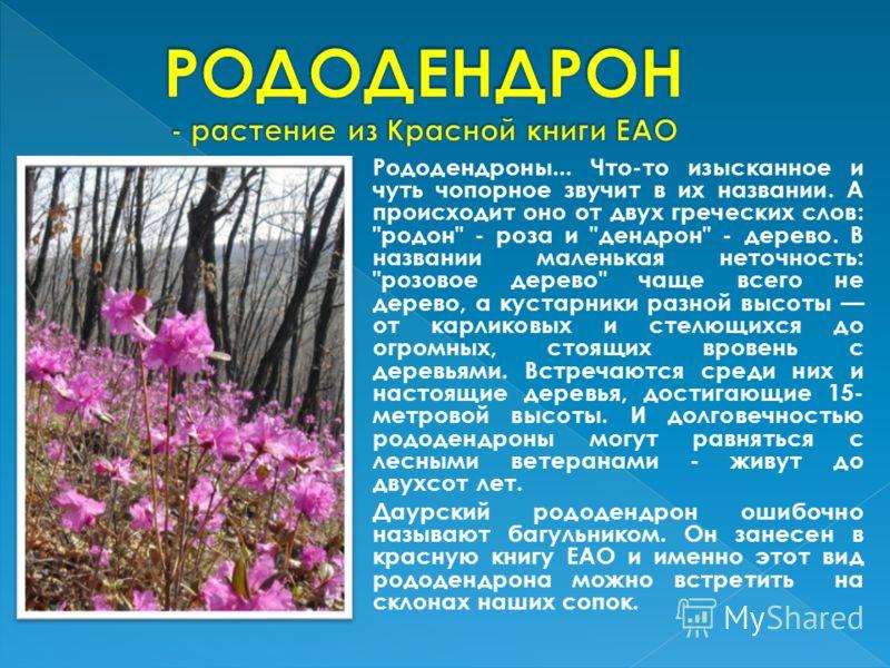 Рододендроны... Что-то изысканное и чуть чопорное звучит в их названии. А происходит оно от двух греческих слов: