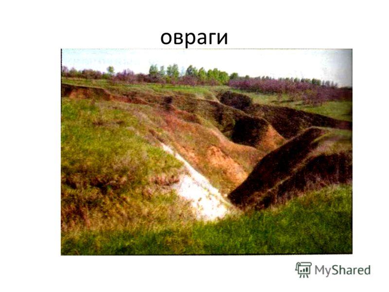 Изменение равнин во времени. Разнообразие поверхностей равнин связано с работой ветра и воды. Там, где много текучих вод, образуются овраги.