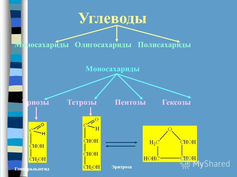 Углеводы Моносахариды Олигосахариды Полисахариды Моносахариды Триозы Тетрозы Пентозы Гексозы Глицеральдегид Эритроза