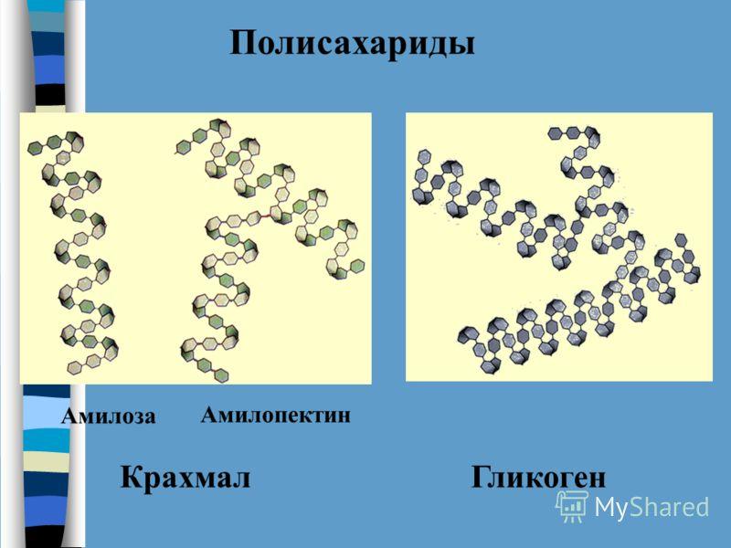 Полисахариды КрахмалГликоген Амилоза Амилопектин