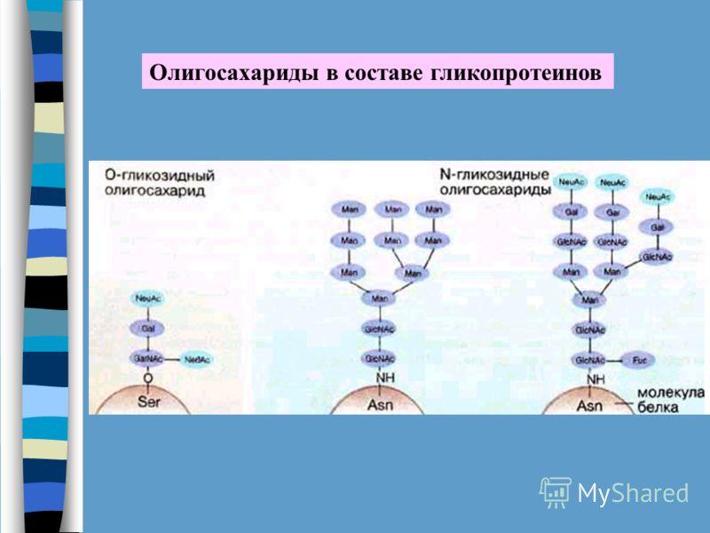 Олигосахариды в составе гликопротеинов