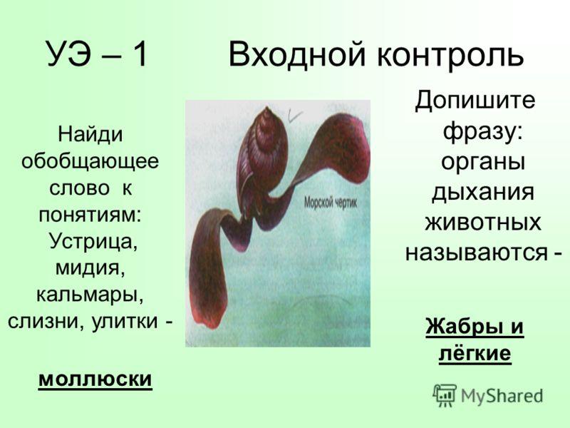 УЭ – 1 Входной контроль Допишите фразу: органы дыхания животных называются - Найди обобщающее слово к понятиям: Устрица, мидия, кальмары, слизни, улитки - моллюски Жабры и лёгкие