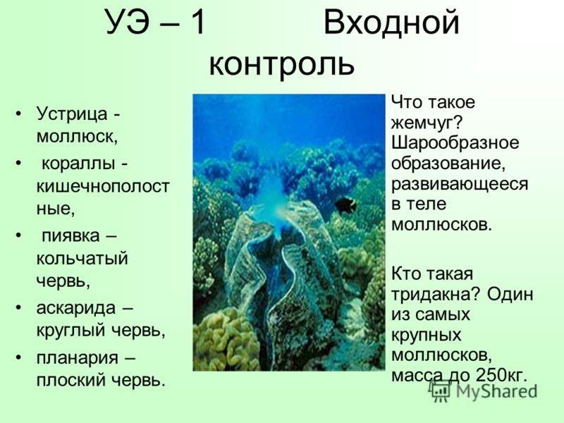 УЭ – 1 Входной контроль Устрица - моллюск, кораллы - кишечнополост ные, пиявка – кольчатый червь, аскарида – круглый червь, планария – плоский червь. Что такое жемчуг? Шарообразное образование, развивающееся в теле моллюсков. Кто такая тридакна? Один